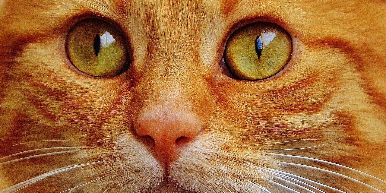 Ce se intampla daca tai mustatile pisicilor