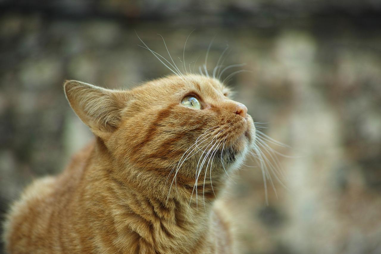 pisicuta cu mustati lungi